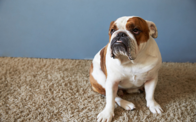 Keeping Good Carpet Health: What's Really Hiding Under Your Carpet